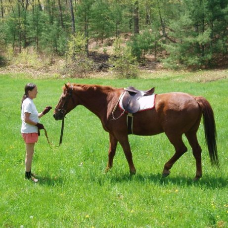 Karat, a registered warmblood school master, joined the farm in Spring 2011