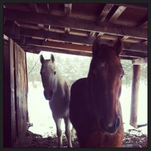 Jazz and Karat hanging outside their stall