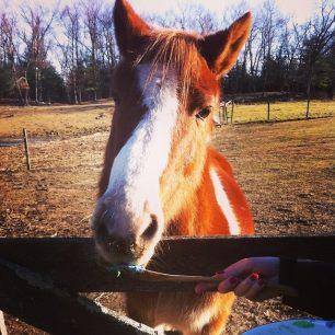 Wilbur is always looking for a treat!